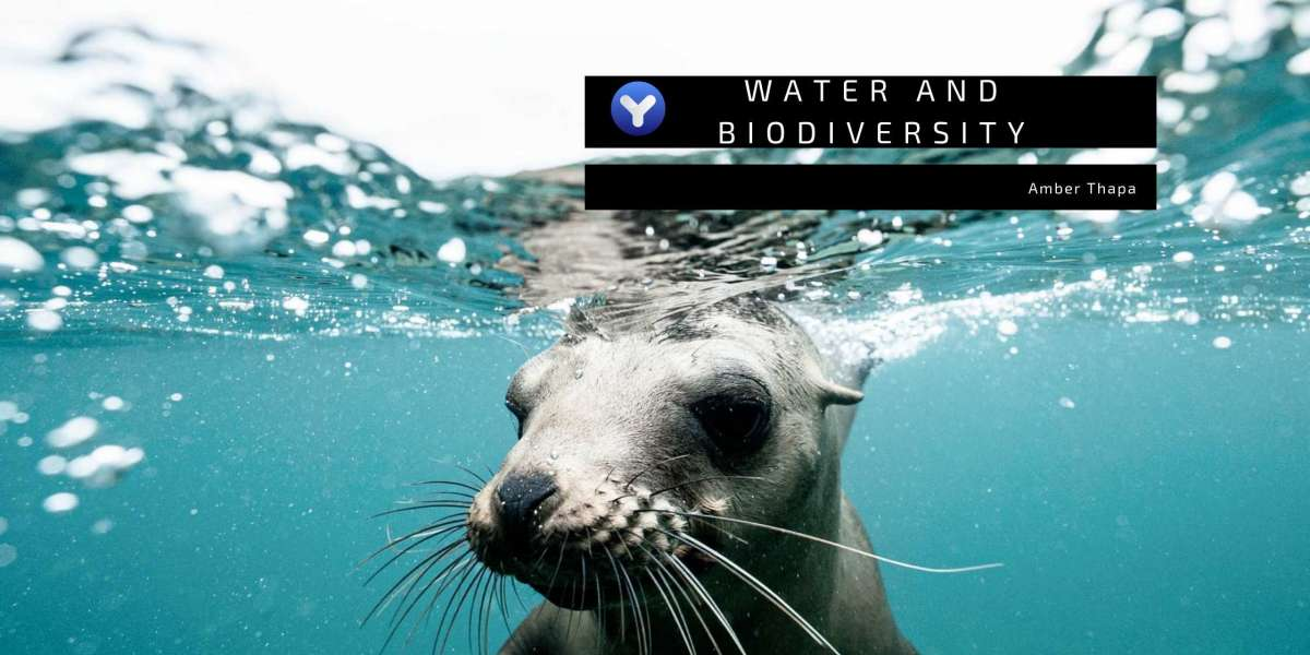 COVID-19: Impacts on Water and Biodiversity